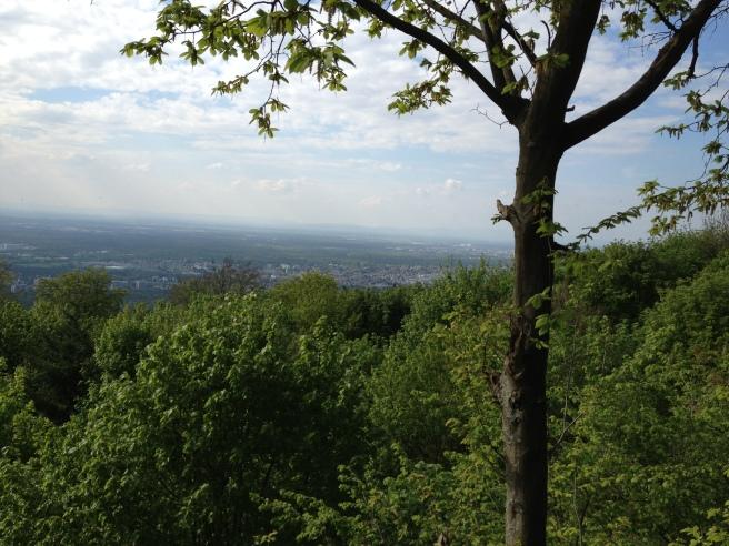 Blick in die Rhein-Main Ebene