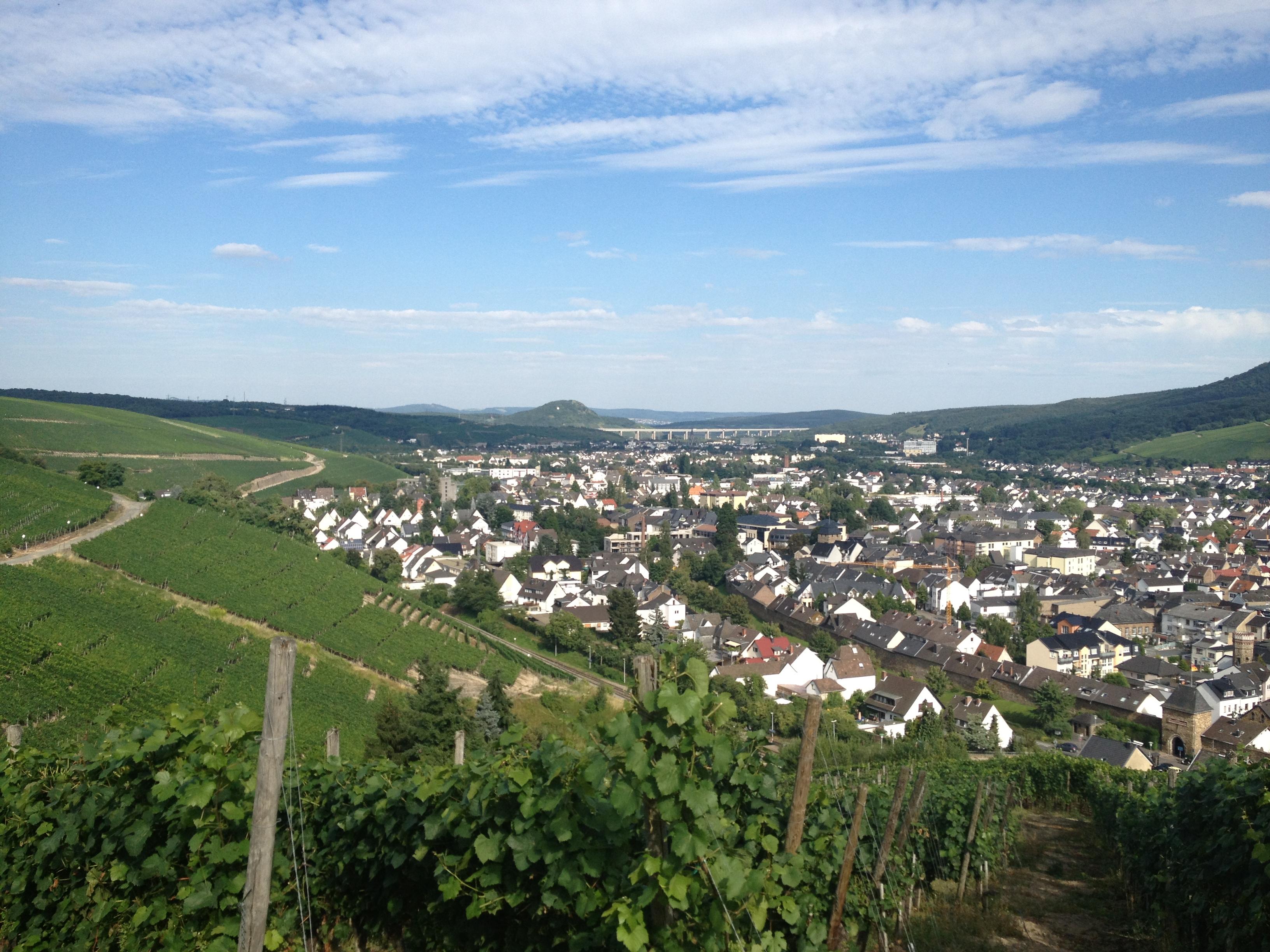 In den Weinbergen bei Ahrweiler mit Blick auf die A61.