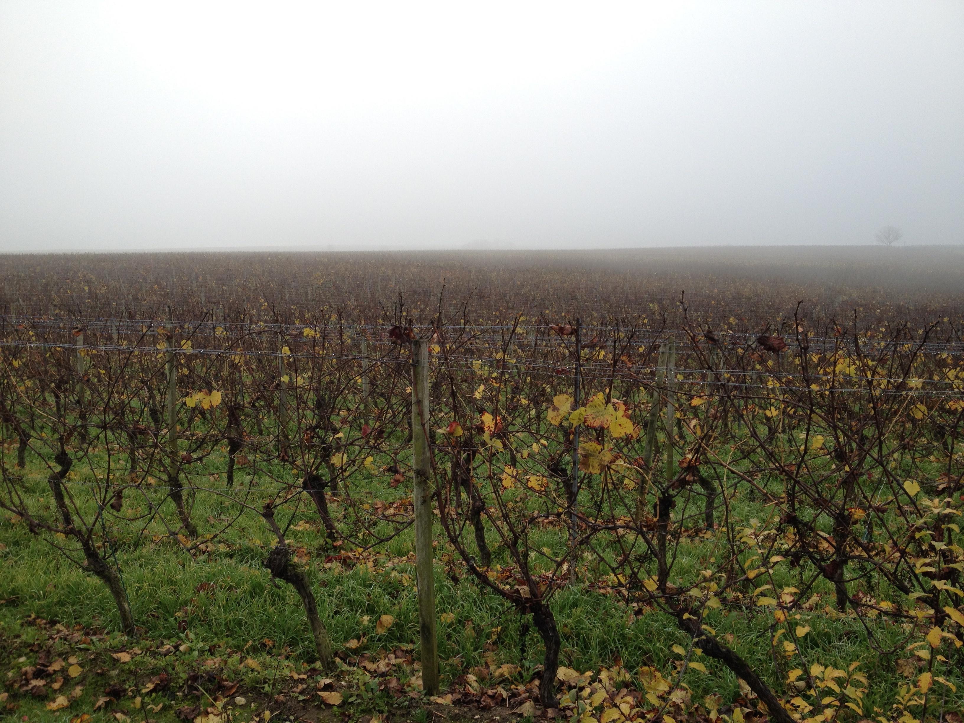 Herbststimmung in den Weinbergen.