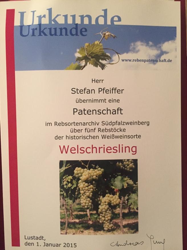 Das Rebsortenarchiv Südpfalzweinberg pflegt alte Rebsorten und bietet Patenschaften an.
