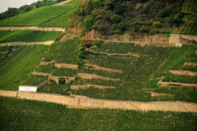 Weingut-Kallfelz-Riesling-Presse-14