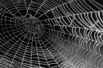 spider-web-with-water-beads-921039_1280